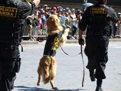 3.  CUSCO Canine police show