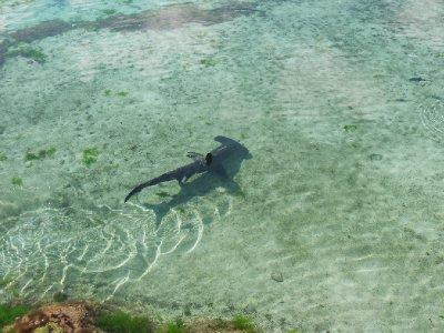 Bahamas 028