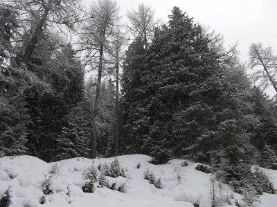 AU_Dorfgastein-Fulseck