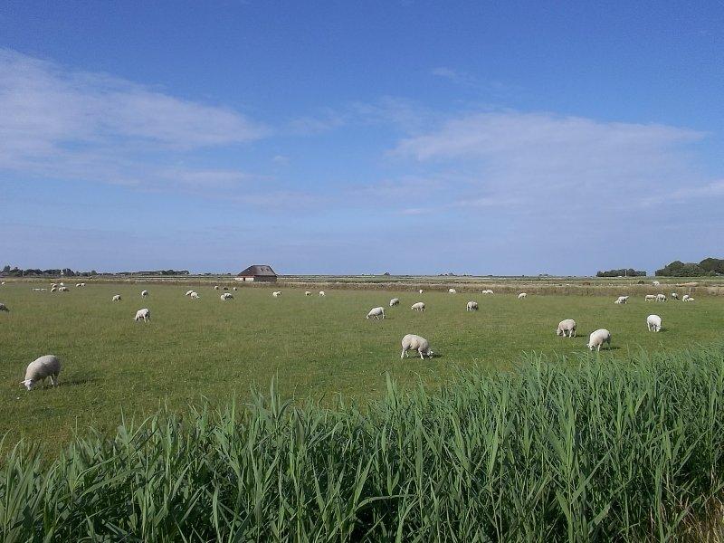 NL_Texel - De Hoge Berg