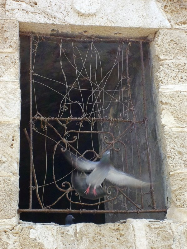 To freedom (Israel, Jaffa Harbour)