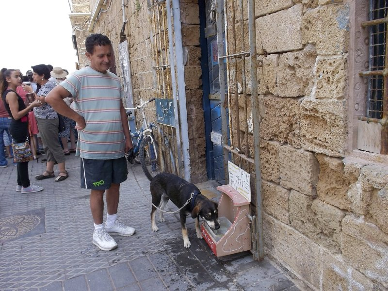 Water for animals (Jaffa, Israel)