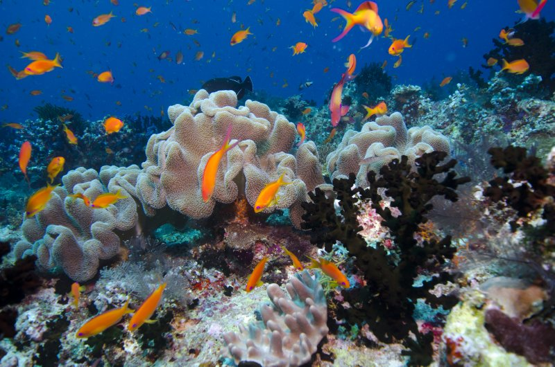 Maldives_underwater bliss