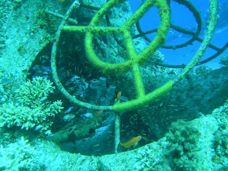 UNDERWATER_Aquaba Gulf of Red Sea. Eilat, Israel
