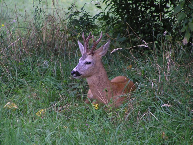 VIENNA_deer in am Steinhof