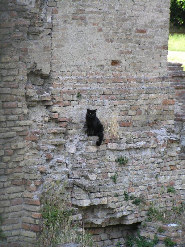 ITALY_Ravenna gato negro