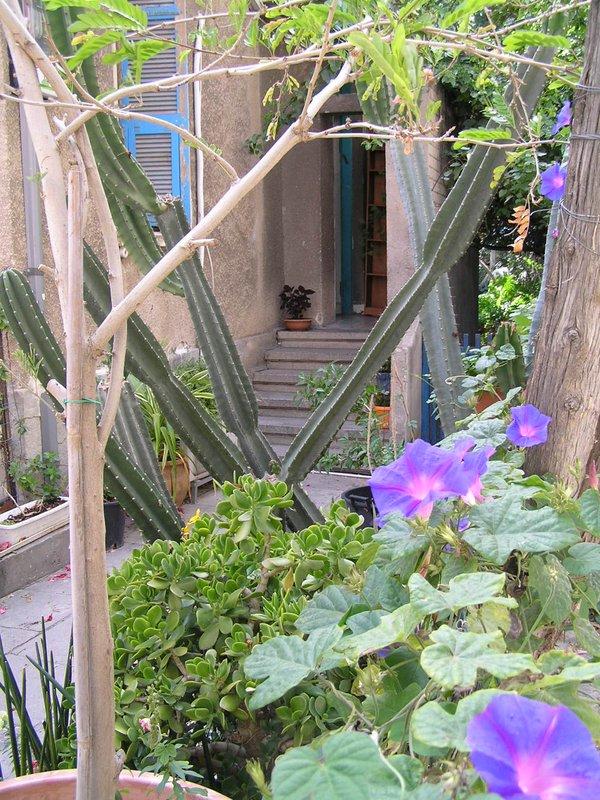 Israel - little garden in central Tel Aviv