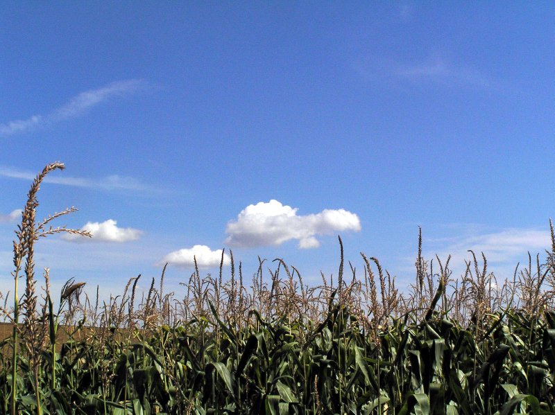 AU_NÖ - sky and the corn field