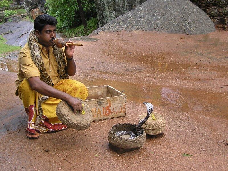 Sri Lanka_music for cobra