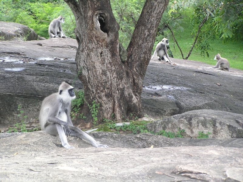 Sri Lanka_Hanumans