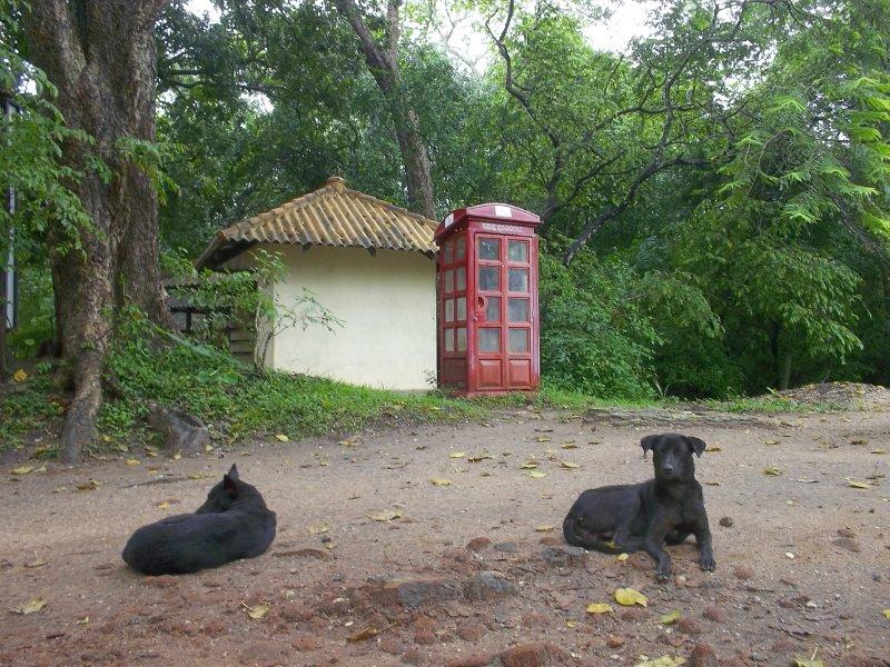 Sri Lanka_dogs and telephone.