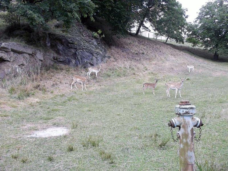 AUSTRIA_deers near Schloss Greinburg
