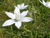 Israel_the Star of Bethlehem