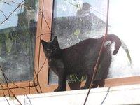 BULGARIA - Bansko - kitty on the window