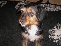 ROMANIA - gypsey dog