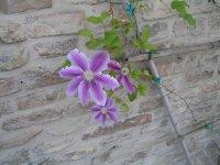 ITALY_Ravenna_botanical garden