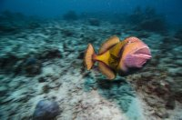 Maldives_fish portrait