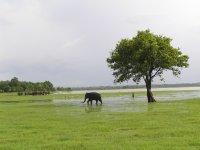 Sri Lanka_Minneriya National Park