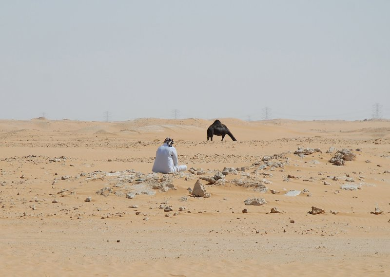 Shepherding Saudi style