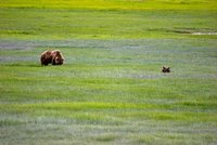 Bears at Lake Clark Wilderness