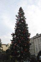 Christmas Trees Sofia
