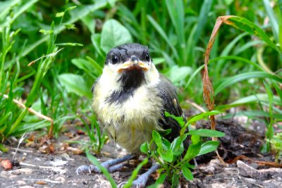 Bird on the Path