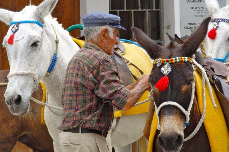 Tending to the donkeys