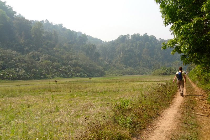 Path to the Jungle