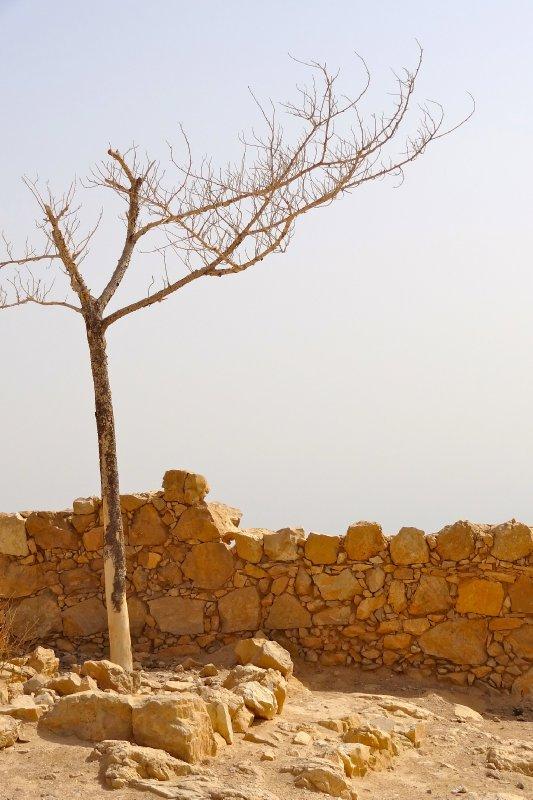 Lonely Tree of Masada