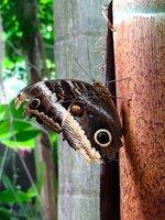 Butterfly Exhibit