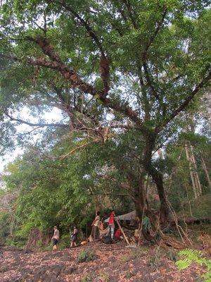 Jungle Camp