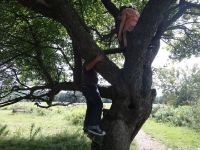 NYstate_sony_tree2.jpg