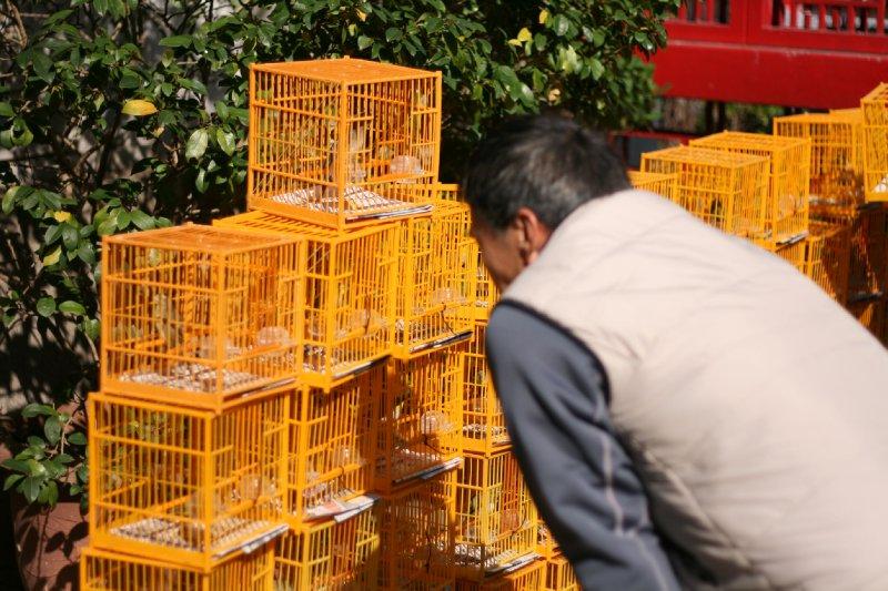 HK_slr_birds2