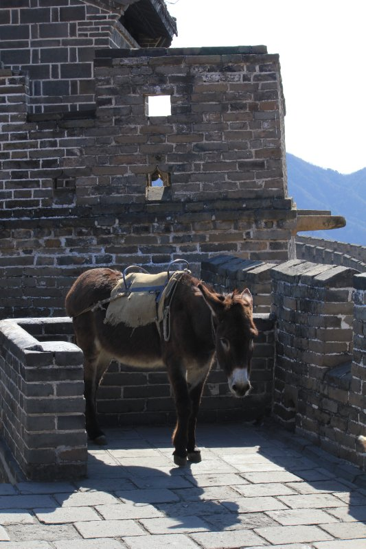 Great Wall, China 218