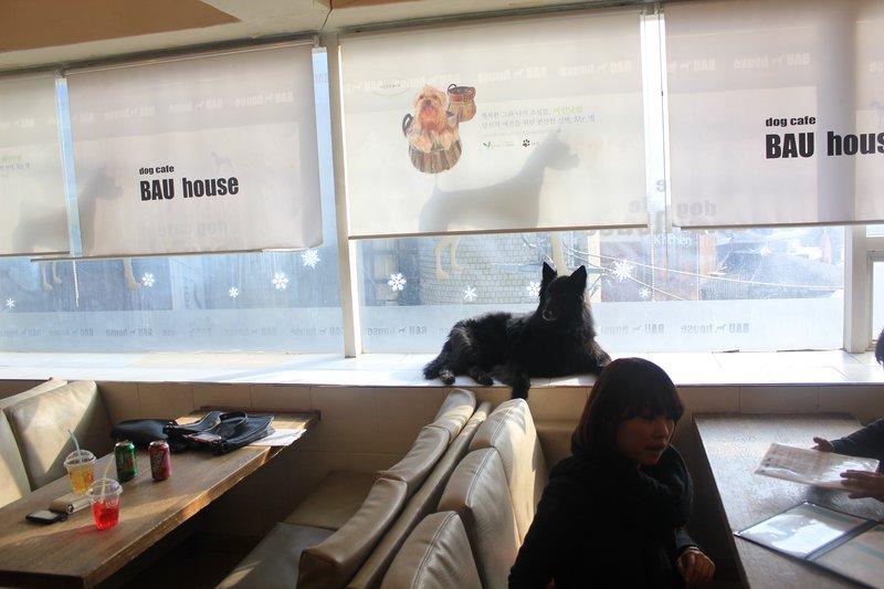 dog cafe 1