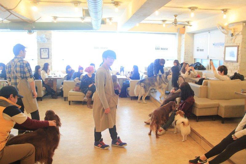 dog cafe 4