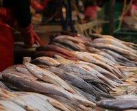 Busan fish market 5
