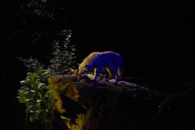 Night Safari Wolf