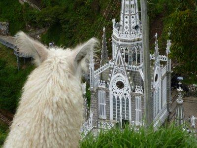 llama overlook