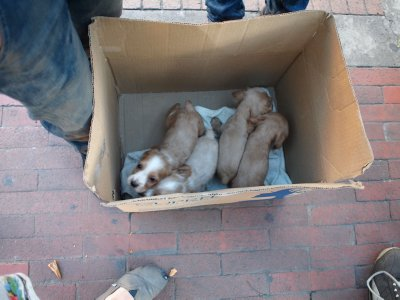 Puppies sold in boxes and out of car trunks...