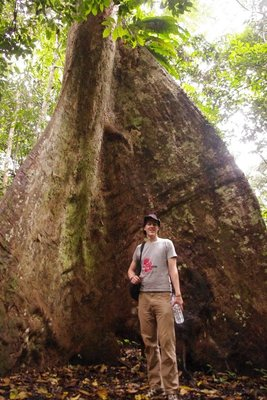 Big tree!!!