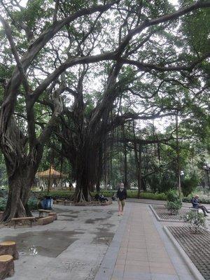 Big old trees
