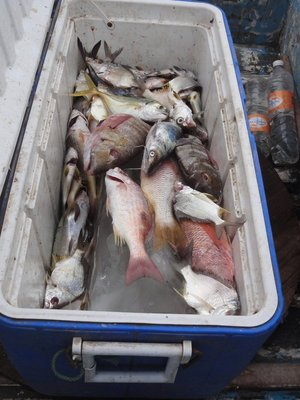 Fresh fish catch