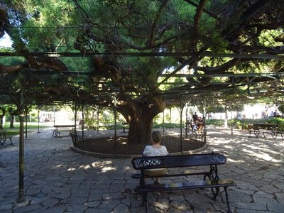 Sitting under the cedar tree