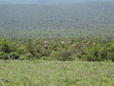 Part of a herd of elephants - so many elephants!