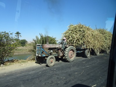 More hauling sugar cane to the factory