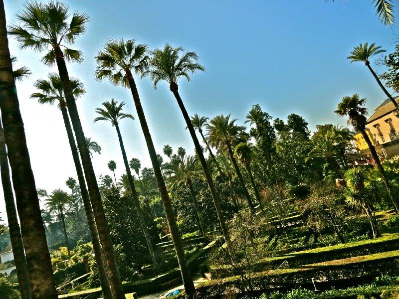 large_palmtreesalcazar.jpg