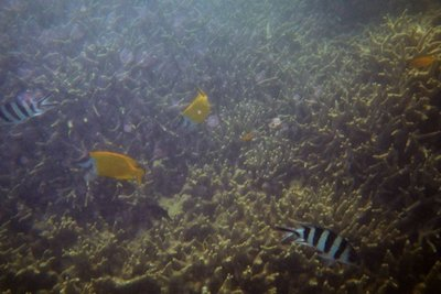 Day 2 - Snorkeling at Blue Pearl Bay (27)