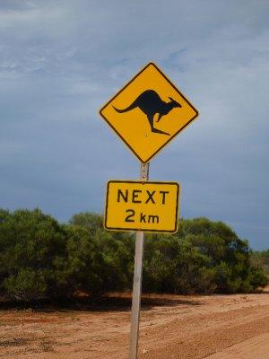 Kangaroos Watch Out