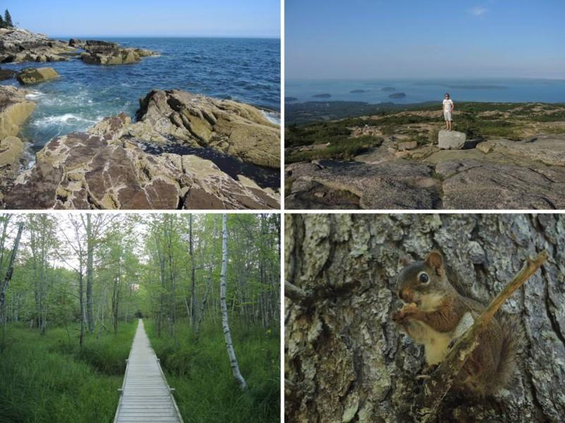 large_Acadia1.jpg